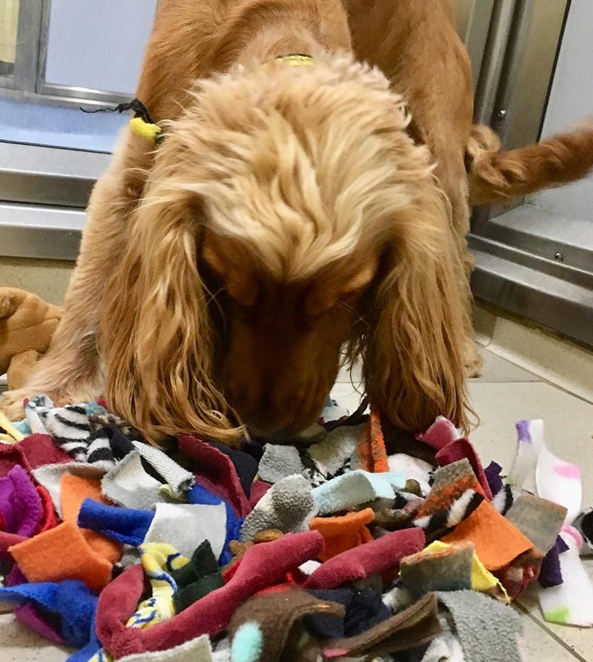 Photo 05-06-2019, dogs trust Bailey